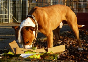 Hundeglück (2)