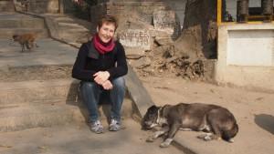 Straßenhund in Kathmandu